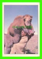 CHAMEAUX, CAMELS, DROMADAIRES -  TENDRESSE DU SUD - PHOTO J. MEHSANI - CIRCULÉE EN 1992 - DIMENSION 17 X  12 Cm - - Autres