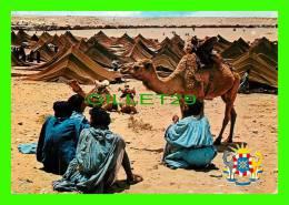 CHAMEAUX, CAMELS, DROMADAIRES -  GRAND MOUSSEM DE TAN-TAN ET ARMOIRIES DE LA VILLE - CIRCULÉE EN 1972 - - Cartes Postales