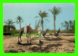 CHAMEAUX, CAMELS, DROMADAIRES -  SUD ALGÉRIEN, TYPES DU SUD - - Autres