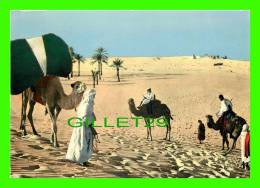 CHAMEAUX, CAMELS, DROMADAIRES -  SUD ALGÉRIEN, LA RENCONTRE DANS LE DÉSERT - - Cartes Postales