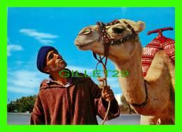 CHAMEAUX, CAMELS, DROMADAIRES -  MAROC, L'HOMME ET LE CHAMEAU - - Cartes Postales