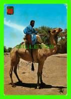 CHAMEAUX, CAMELS, DROMADAIRES -  MEHARISTES DE M'HAMID - CIRCULÉE - - Cartes Postales