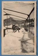 88 - GERARDMER -- L'élevage S. A. - Ranch De Fachepremont - Jeune Femelle - Gerardmer