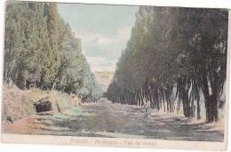 03117 Frascati Mondragone Viale Dei Cipressi - Altre Città