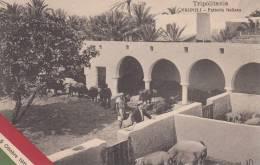 TRIPOLI - FATTORIA ITALIANA 5 OTTOBRE 1911 BELLA FOTO D'EPOCA ORIGINALE 100% - Libië