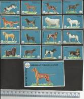 DOGS CHIENS HONDEN HUNDE TERRIER IRISH SETTER KUVASZ POINTER RETRIEVER TECKEL DACHSHUND Matchbox Labels - Boites D'allumettes - Etiquettes
