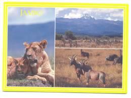 Afrique - Kenya - Jambo - Lions, Grevy´s Zebra Beneath Mount Kenya And Topi - Kenia