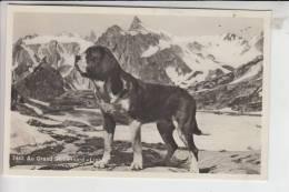 "TIERE - HUNDE - BERNHARDINER, Au Grand St.Bernard ""LION"" - Hunde"