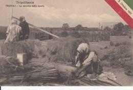 TRIPOLI - LA RACCOLTA DELLO SPARTO  5 OTTOBRE 1911   BELLA FOTO D´EPOCA ORIGINALE 100% - Libya