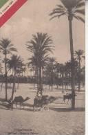 TRIPOLITANIA - NELL'OASI BOSCO DI PALMIZI  5 OTTOBRE 1911 VG 1911   BELLA FOTO D´EPOCA ORIGINALE 100% - Libia