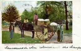 N°28173 -cpa Aiken -Picking Cotton- - Aiken