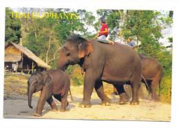 Thaïlande - That Elephants - Tailandia