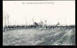 AUSTRALIE SYDNEY / Attelage Australiens / - Sydney