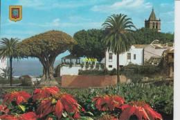 Tenerife  Icod De Los Vinos - Tenerife
