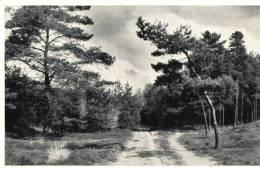 Lutterzand Weggetje Naar De Mekkelhorst - Postkaarten