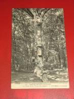 SAINT GERMAIN EN LAYE  - Le Chêne De La Vierge Des Anglais  -  1909 - St. Germain En Laye