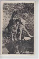 TIERE - HUNDE -Schäferhund - Chien De Berge - Sheperd Dog - Herdershond - Hunde