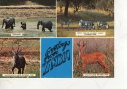 ZAMBIA   * - Zambia