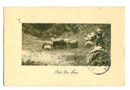 Bergère Et Moutons - Près Du Bois - Elevage