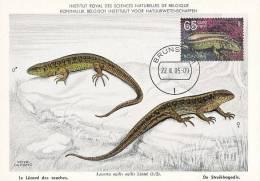 D10255 CARTE MAXIMUM CARD FD NETHERLANDS - LACERTA - LE LÉZARD CP MUSEUM ORIGINAL - Reptiles & Amphibians