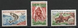 Faune - Gabon