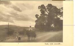 TEM170 - Trotta Somarello - Asino Donkey Capra Goat - Asino