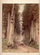 PHOTOGRAPHS Nikkō National Park, In Nikkō, Tochigi  SUGI OF IMAICHI NIKKO ,CARDBOARD SIZE 20 X 26 Cm - Other