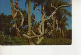 THE PARROT TREE   ESTADOS UNIDOS  U.S.A. OHL
