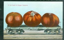 Acar Load Of Oregon Tomatoes     - Um107 - Etats-Unis