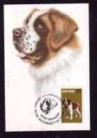 CHIENS,DOGS,1994,SAINT BERNARD, CM,MAXICARD,CARTES MAXIMUM ROMANIA. - Cani