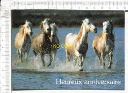 CHEVAUX  -  Chevaux Dans Les Marais - Pferde