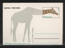 POLAND PC 1974 100 YEARS OF POZNAN ZOO MINT GIRAFFE - Enteros Postales
