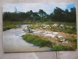 Puerto Rico  -Lavando La Ropa En El Campo - Washday    D91296 - Puerto Rico