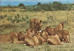 """Tansania - Lions - Nice Stamp  """"animal"""" - Tansania"""