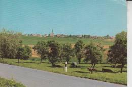 5529 NUSBAUM, Ortsansicht, Druckstelle - Bitburg