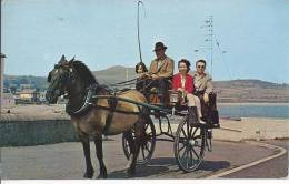 6059 - Irish Jaunting Car - Irlande