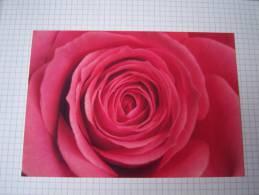 Entier Postal Rose Rose à Usage Interne -Suède - Rosas