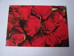 Entier Postal Roses Rouges  à Usage Interne -Suède - Rosas
