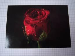 Entier Postal Rose Rouge Et Rosée  à Usage Interne -Suède - Rosas