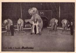 Circo Delle Quattro Sorelle Medrano , Elefanti  * - Circus