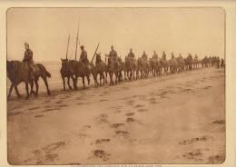 planche du service photographique arm�e belge guerre 14-18 WW1 militaire chevaux