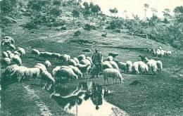 Réf : CTX -13- 135 : Monte -Carlo Les Moutons Aux Baudites - Monaco
