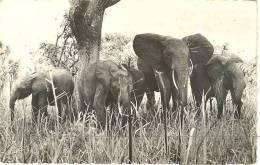 AF002 - Faune Africaine - Elephant Elefante - Camerun