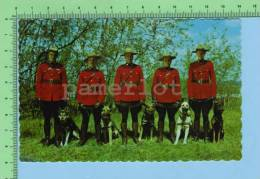 Cornwall Ontario Canada( Mounted Police And Their Trained Dogs For Police Work) Post Card Carte Postale - Uniformen