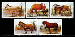 Antilles Néerlandaises 2006 Anes