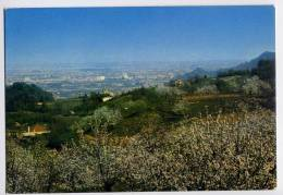 Italie--Colli Euganei - Torreglia Alta - Ciliegi In Fiore, Cpm N° 153  éd MT - Italy