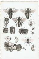 MELI - ADINKERKE - DE PANNE - Anatomie Et Ennemis De L'abeille - Anatomie En Vijanden Der Bij - De Panne