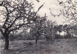 Gembloux - Grand-Manil Ecole Prov. Horticulture, Vue Verger (peu Vue, Grand Format)1 - Gembloux