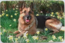 German Shepherd /  - 2005 - Calendarios