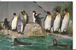BOURTON-ON-THE-WATER.Birdland Zoo Gardens. - Angleterre